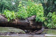 Árvore caída no meio do rivver Fotos de Stock Royalty Free