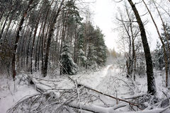 A árvore caída obstruiu o trajeto na floresta Foto de Stock Royalty Free