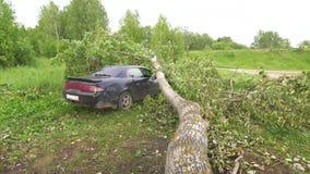 A árvore caiu no carro, os efeitos do furacão video estoque