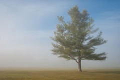 Árvore calma no campo rural Imagens de Stock
