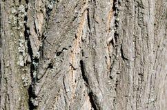 Árvore Casca de madeira E nave r Textura de madeira Texturas naturais Fundo Backgrou de madeira imagens de stock royalty free