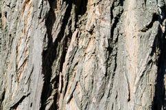 Árvore Casca de madeira E nave r Textura de madeira Texturas naturais Fundo Backgrou de madeira fotografia de stock