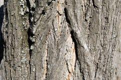 Árvore Casca de madeira E nave r Textura de madeira Texturas naturais Fundo foto de stock royalty free