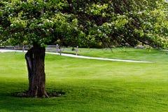Árvore, cerca, gramado Imagens de Stock Royalty Free