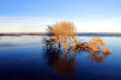 Árvore cercada pela água Foto de Stock