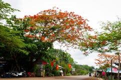 Árvore chamativo das flores na estrada do campo Foto de Stock
