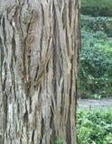 Árvore cinzenta ao lado das plantas verdes Imagem de Stock Royalty Free