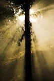 Árvore clara - raias do sol Foto de Stock Royalty Free