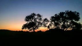 Árvore coa muitos ramos da silhueta colorida mágica do por do sol foto de stock