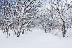 Árvore coberto de neve Fotografia de Stock