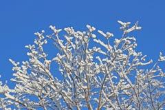 Árvore coberto de neve isolada no fundo do céu azul acima de próximo fotografia de stock royalty free