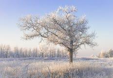 Árvore coberto de neve só em um campo Fotos de Stock