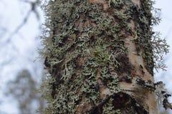 ?rvore coberto de vegeta??o bonita na floresta foto de stock