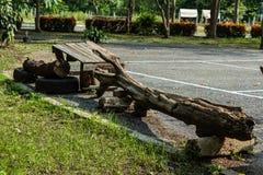 A árvore colocada senta-se em um parque público Foto de Stock