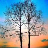 Árvore colorida Fotografia de Stock
