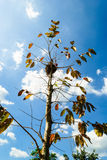 Árvore colorida com o ninho na parte superior Imagem de Stock Royalty Free