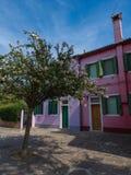 Árvore colorida da casa e da flor em Burano Veneza Itália foto de stock royalty free