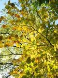 A árvore colorida do outono sae no parque, Lituânia imagem de stock