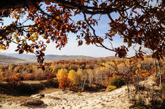 Árvore colorida na pastagem Fotografia de Stock