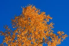 Árvore colorida no outono Foto de Stock Royalty Free