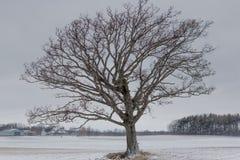 Árvore com alma Imagens de Stock Royalty Free