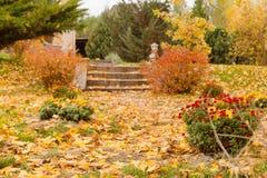 Árvore com as folhas douradas no outono Foto de Stock Royalty Free