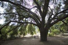 Árvore com banco Imagem de Stock