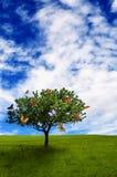 Árvore com borboletas Imagens de Stock Royalty Free