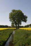 Árvore com campo da violação um ribeiro em Alemanha fotografia de stock