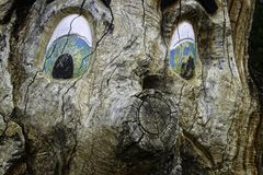 Árvore com cara estranha Fotografia de Stock