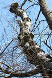 Árvore com cogumelos fotografia de stock