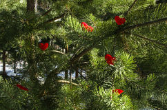 Árvore com corações groving Fotos de Stock Royalty Free
