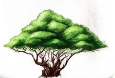 Árvore com a coroa dada forma pirâmide ilustração do vetor