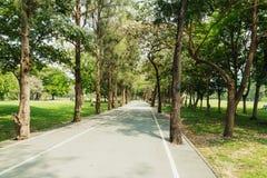 Árvore com a estrada no parque Imagens de Stock