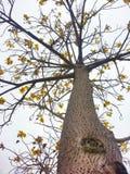 Árvore com flores Imagem de Stock