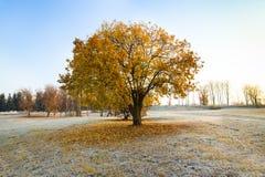 Árvore com folha regada Fotos de Stock Royalty Free
