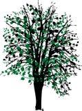 Árvore com folhas Fotografia de Stock
