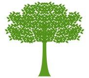 Árvore com folhas Imagens de Stock