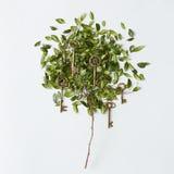 Árvore com folhas Fotos de Stock