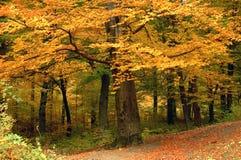 Árvore com folhas amarelas imagem de stock royalty free