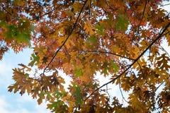 Árvore com fundo vermelho da folha Imagem de Stock Royalty Free