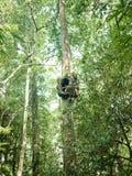 Árvore com furo fotos de stock royalty free