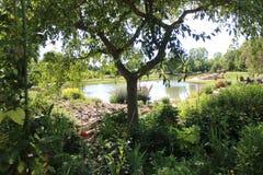 Árvore com a lagoa no fundo Fotografia de Stock