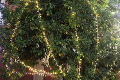 Árvore com luzes de Natal fotos de stock