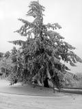 Árvore com neve Fotografia de Stock Royalty Free