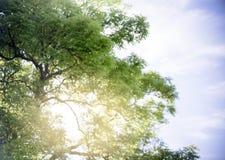 Árvore com o céu azul dramático fotos de stock royalty free