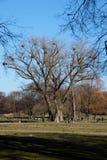 Árvore com o visco no jardim inglês imagens de stock royalty free