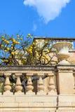 Árvore com os limões maduros no balcão medieval no quadrado de Piazza Duomo em Siracusa, Sicília, Itália O quadrado histórico pri foto de stock royalty free