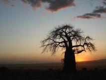 Árvore com por do sol, Losimongure do Baobab, Tanzânia fotos de stock