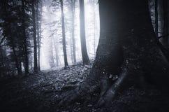 Árvore com raizes gigantes na floresta escura misteriosa Fotos de Stock